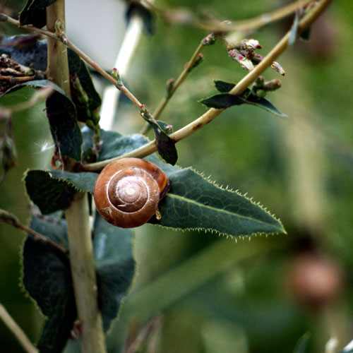 Gardening answer: SNAIL