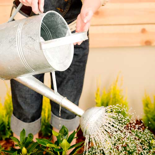 Gardening answer: WATERING CAN