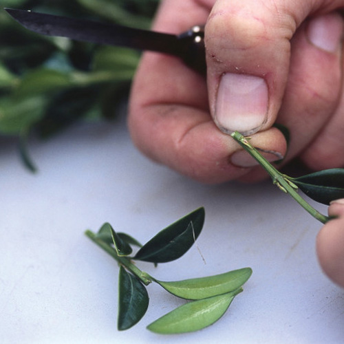 Gardening answer: CLIPPING