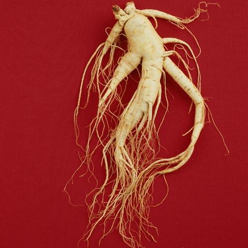 G is for... answer: GINSENG
