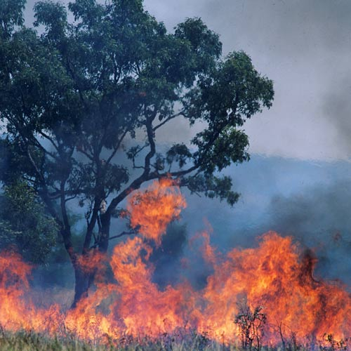 I ♥ Australia answer: BUSH FIRE