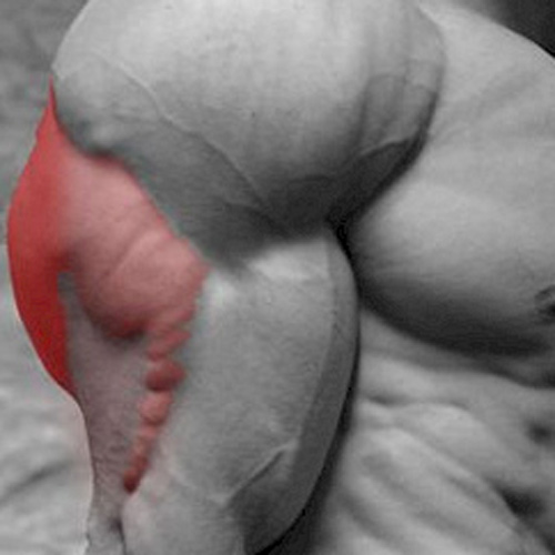 Keep Fit answer: TRICEP