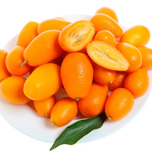 K is for... answer: KUMQUAT